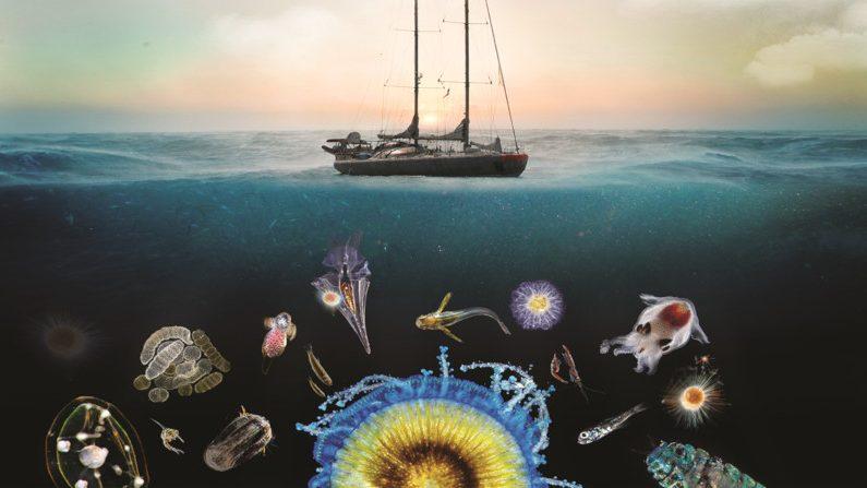 image-Quand l'expédition Tara Océans explore la diversité du plancton
